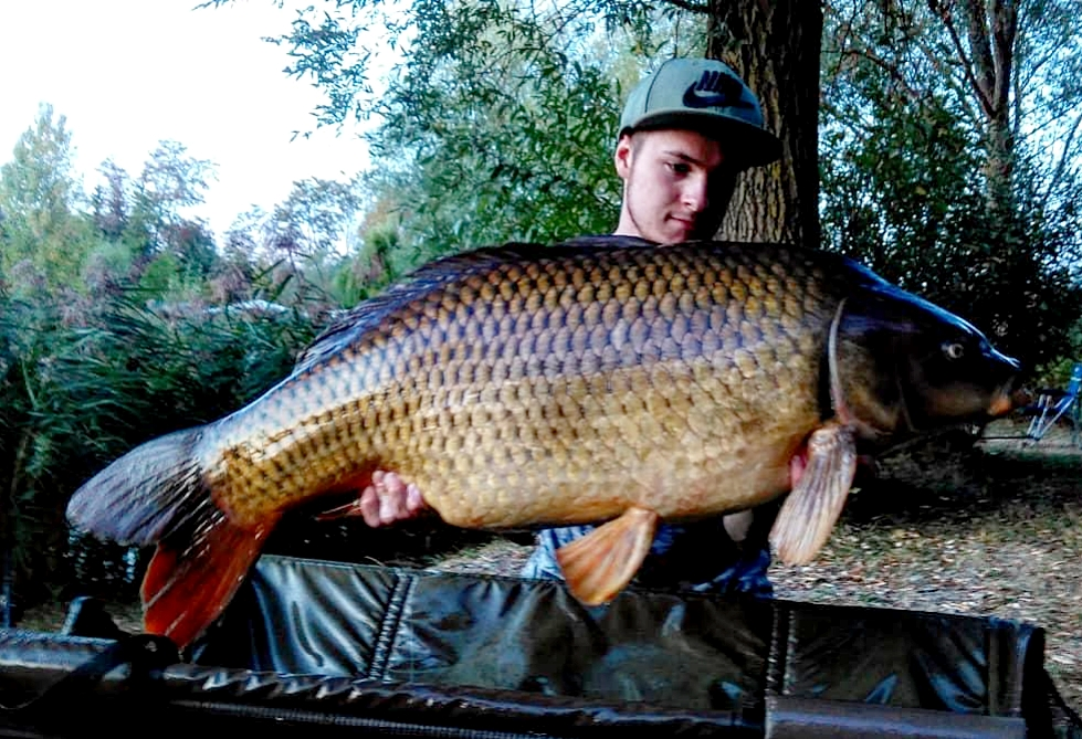 german carp on source