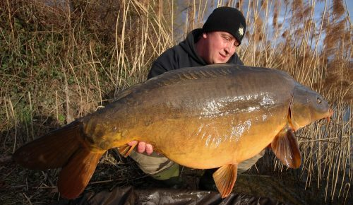 54lb mirror carp landed on complex-T