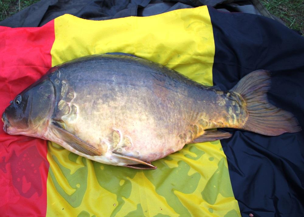 carp fishing belgium canal