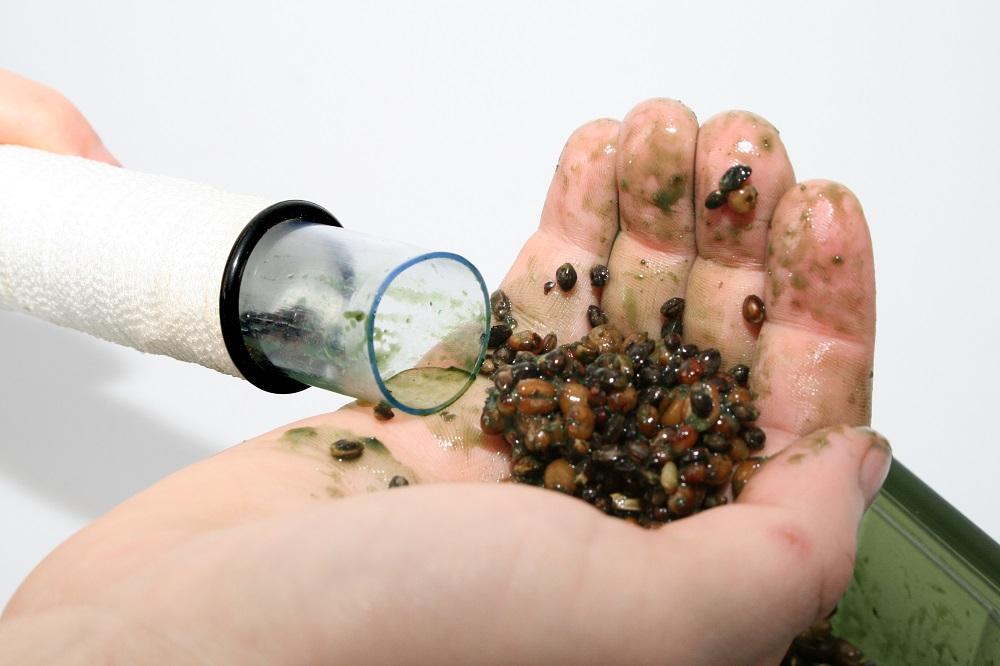 pva bag of mixed particles for carp
