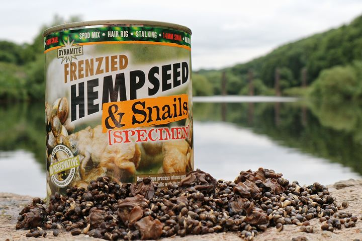 hemp and snails for tench