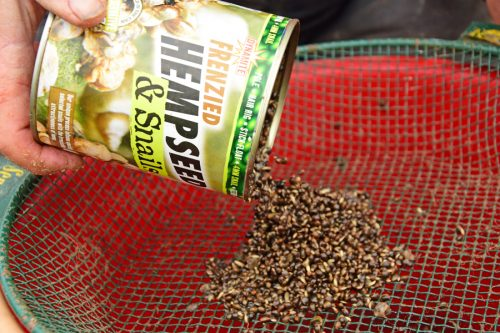 hemp and snails for fishing