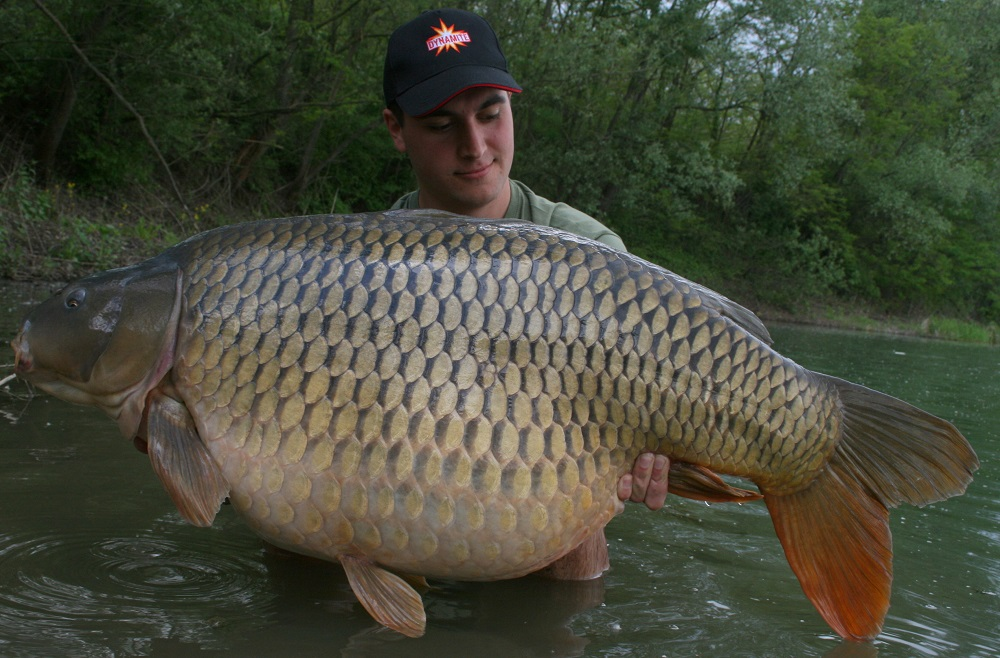 Kristof Cuderman Crave Boilies 9th carp over 50lb