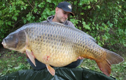 31,1kg hot fish caught carp