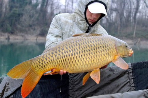 Manuel Bizzo, Source caught common carp