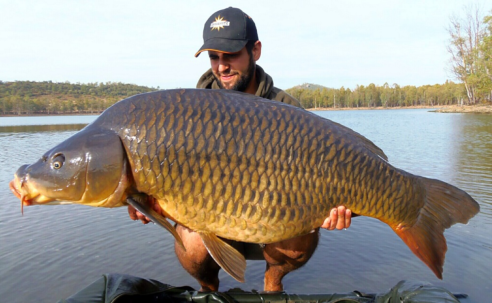 carlitos gomez spanish common carp