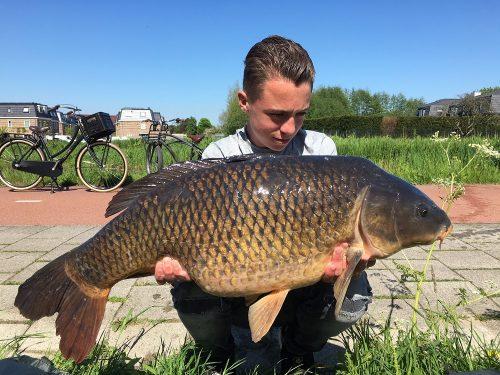 monster tiger nut boilies carp fishing bait