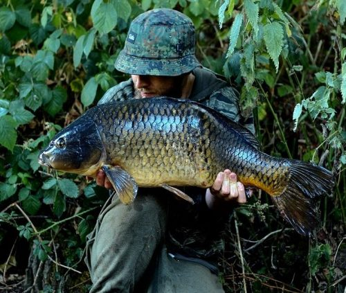 dave williams yateley carp fishing