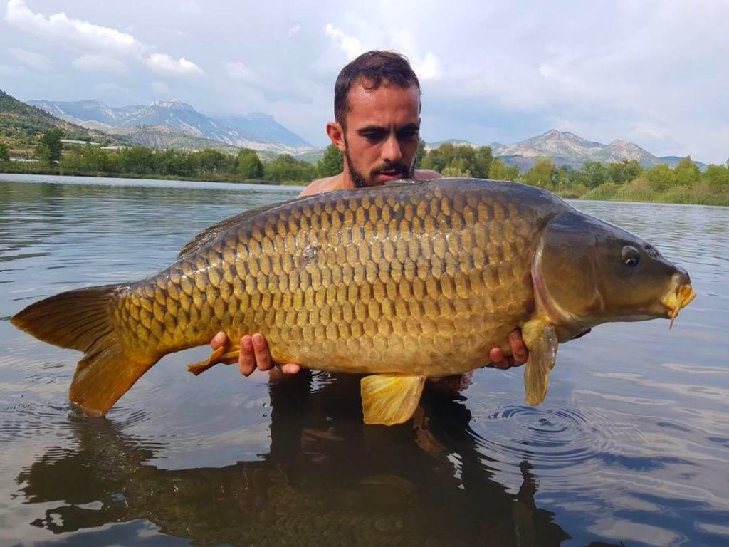 marine carreras mulberry plum pop up caught carp france lake