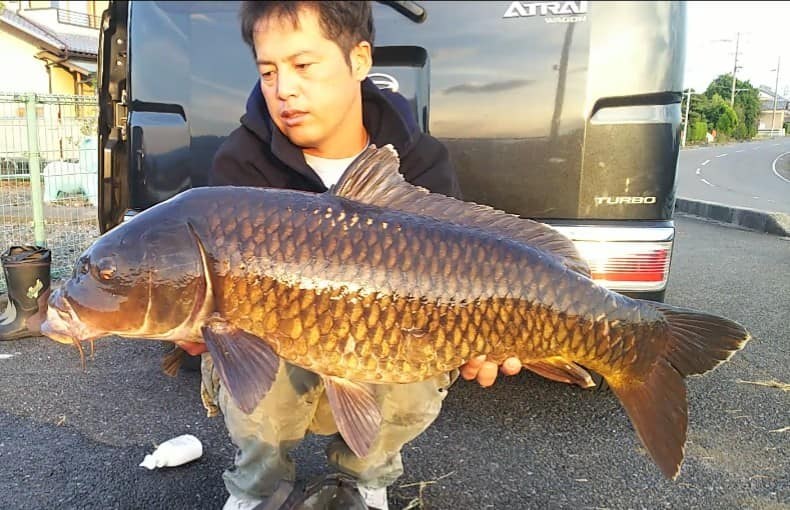 japan carp fishing river carp
