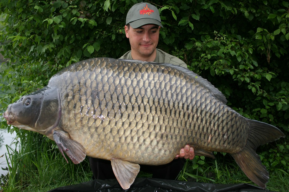 2013 Italy 32.3kg 71.2lb Robin Red 20mm and 15mm pop-up 2