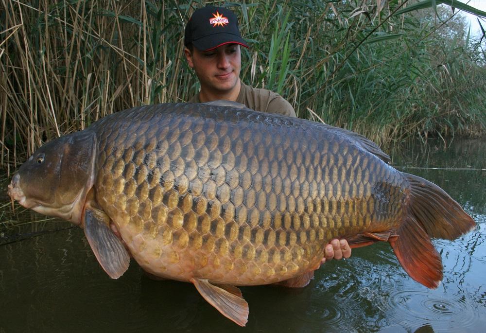 2016 Austria 39.8kg 87.8lb complex-t 20mm