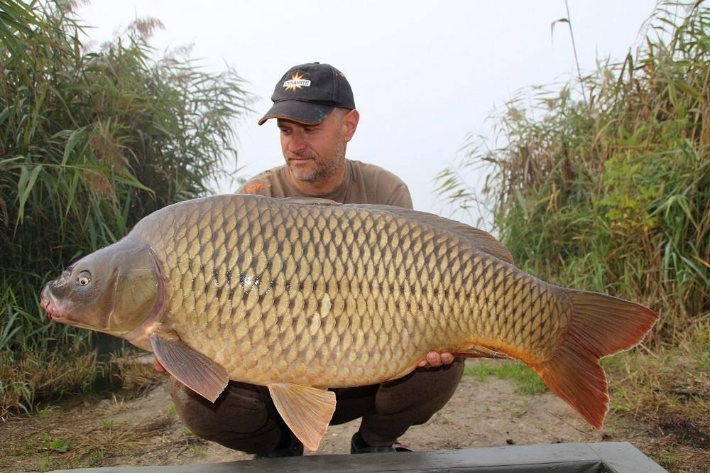 Srecko Karadzic croatia carp fishing red amo boilies