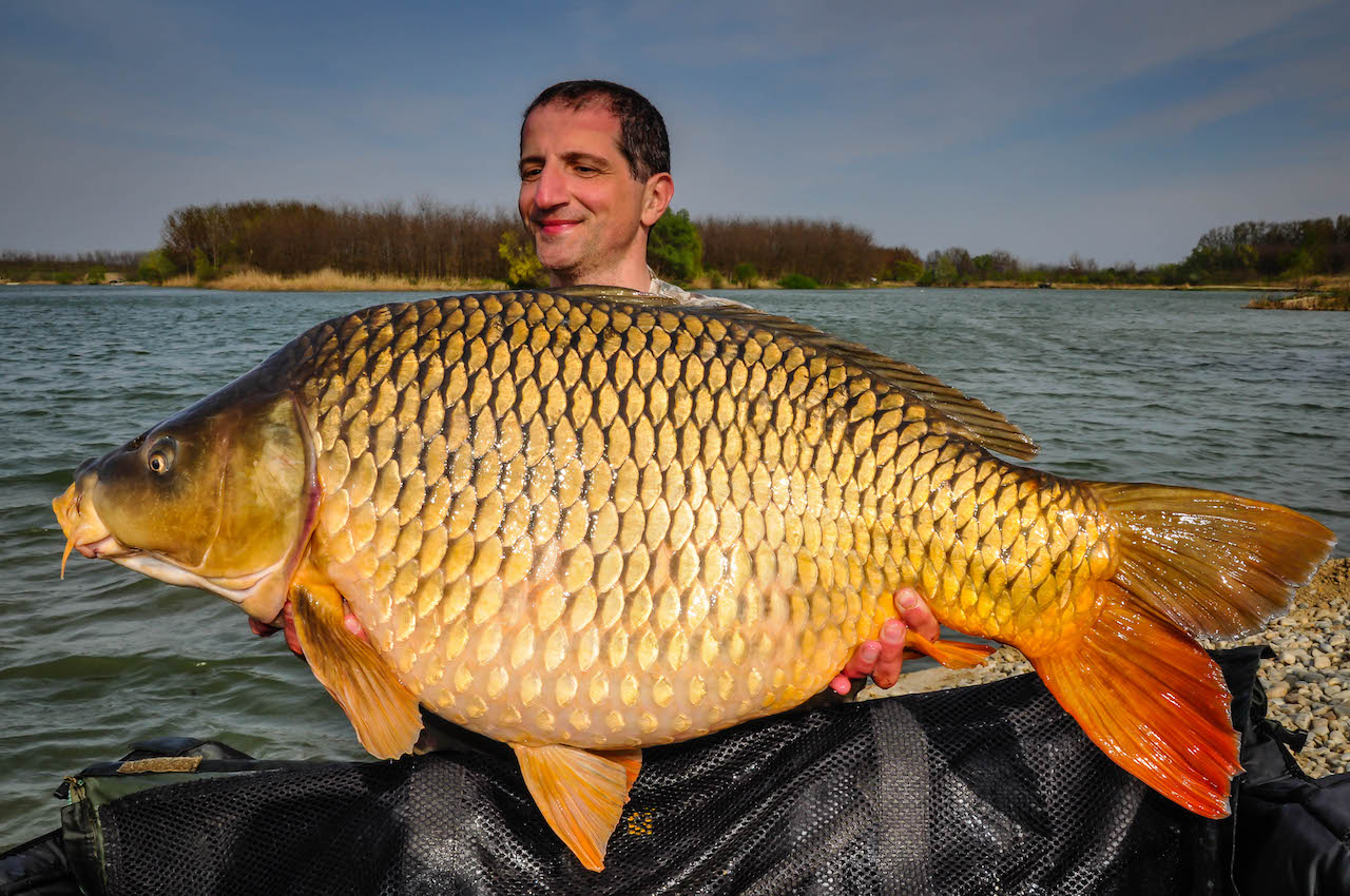 victor costache lake vaarlam common carp complex-t