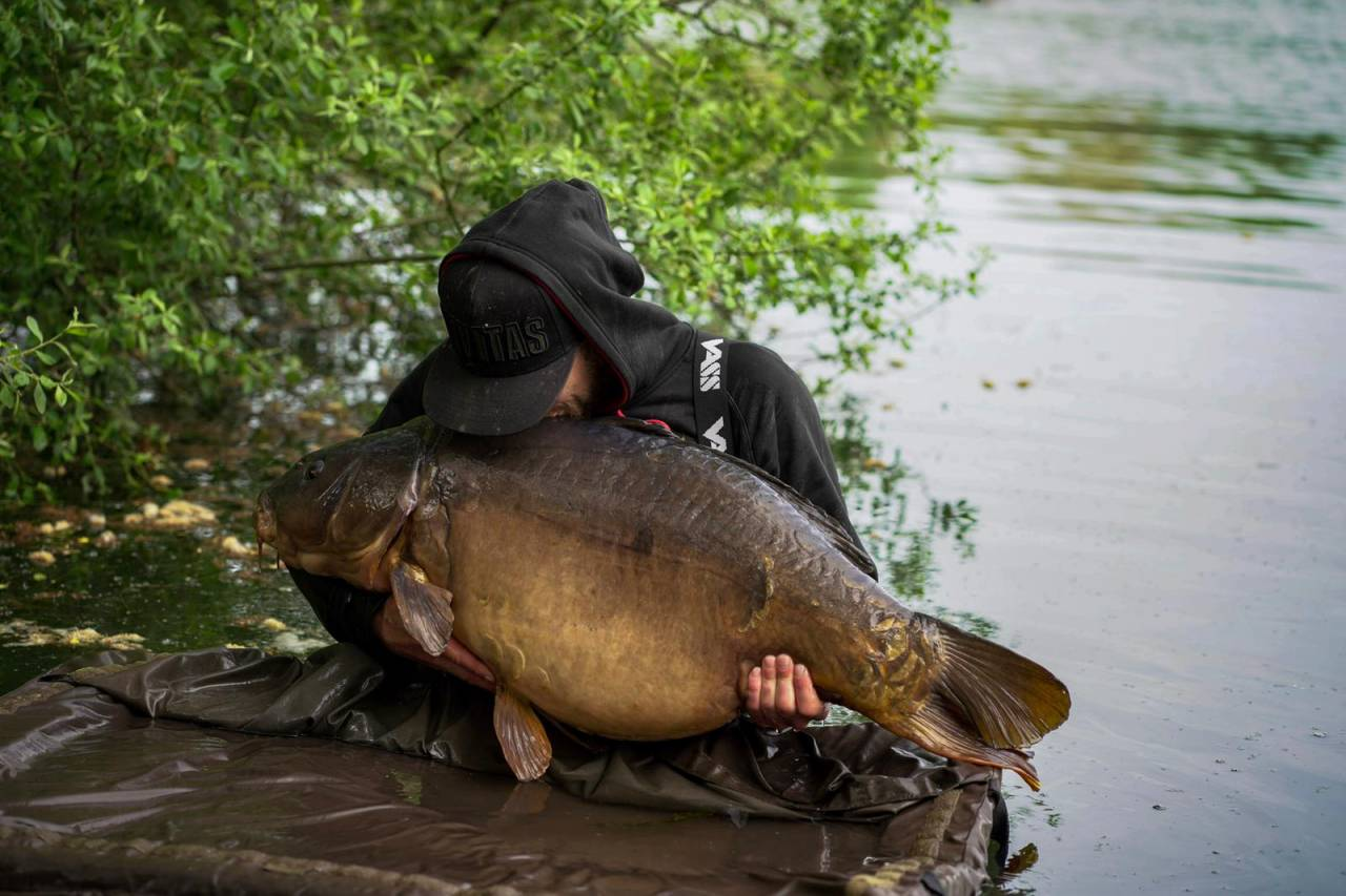 hit n run for uk fifty pound carp