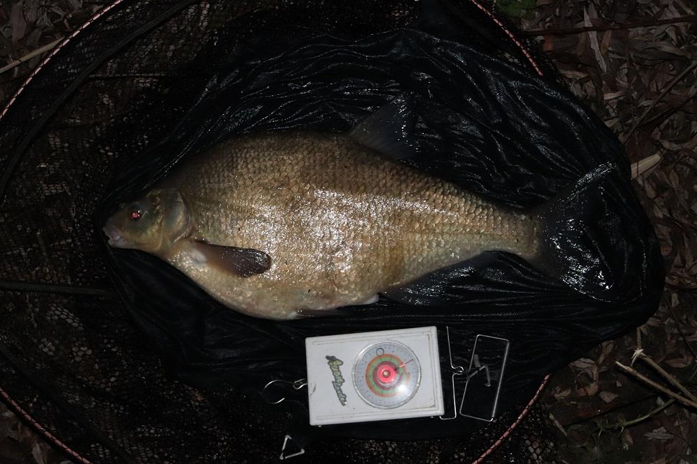bream fishing tony gibson catch