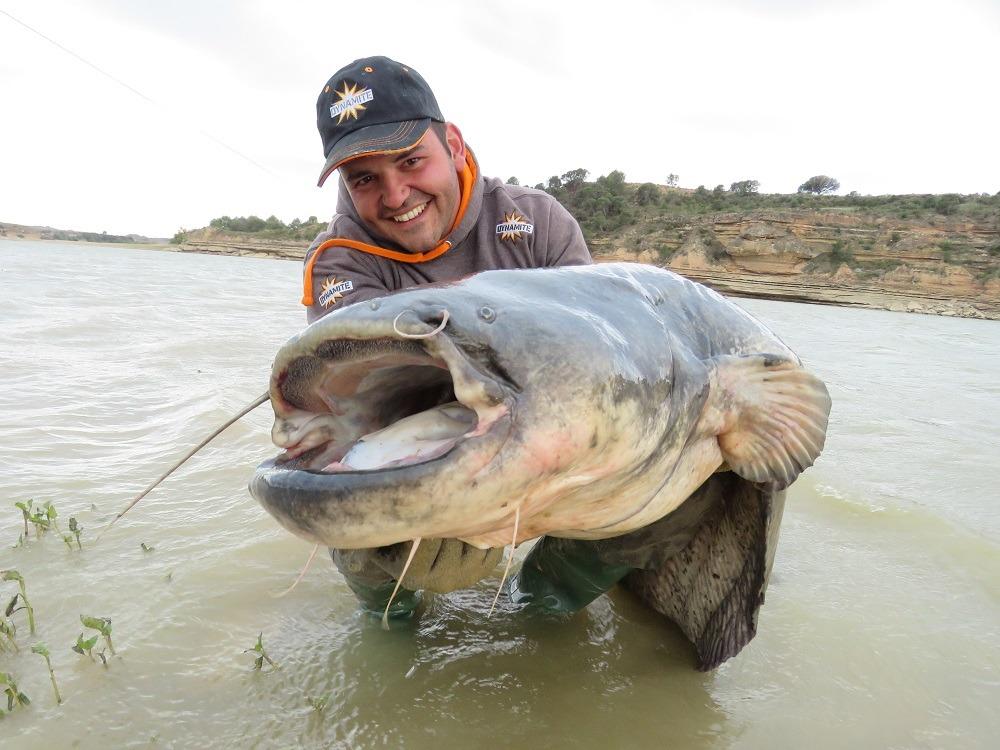 river ebro catfish eduardo zancada