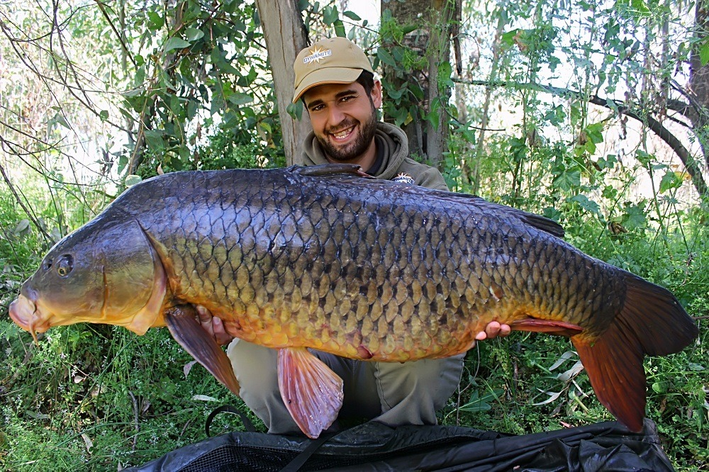 carlitos monster tiger nut spanish common carp