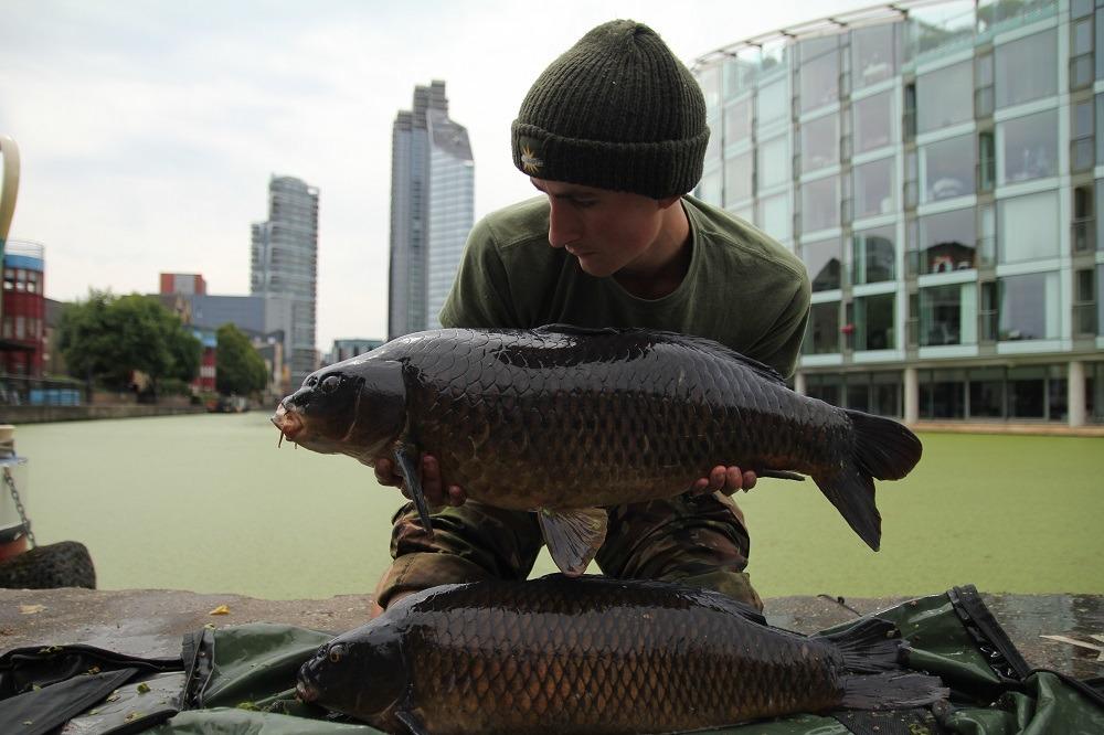 jacob worth brace of london carp