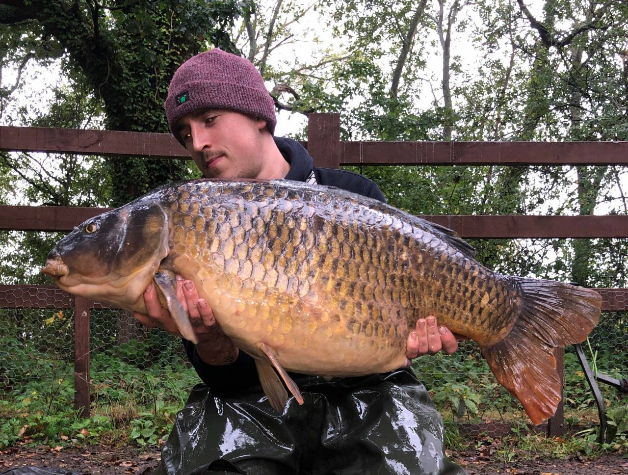 swan valley red amo forty common
