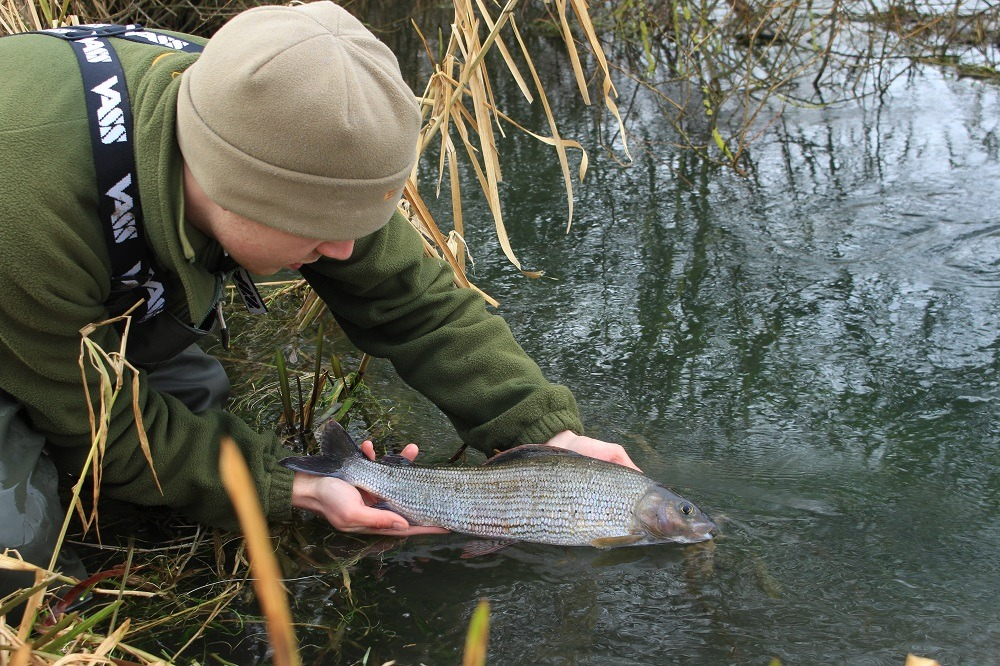 Releasing a big grayling into the cold waters of a Yorkshire chalk stream.