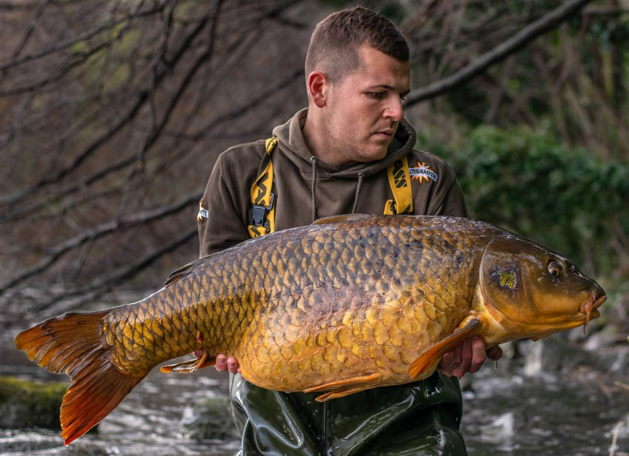 Maurizio Mariotti with a beautiful common carp deceived by a single 20 mm Monster Tiger Nut boilie on a bed of matching boillies and pellets.