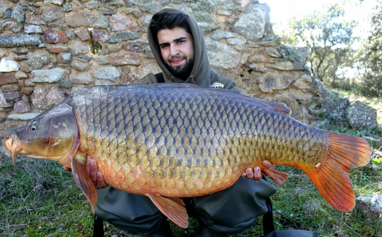 carlos mateo hot fish common carp