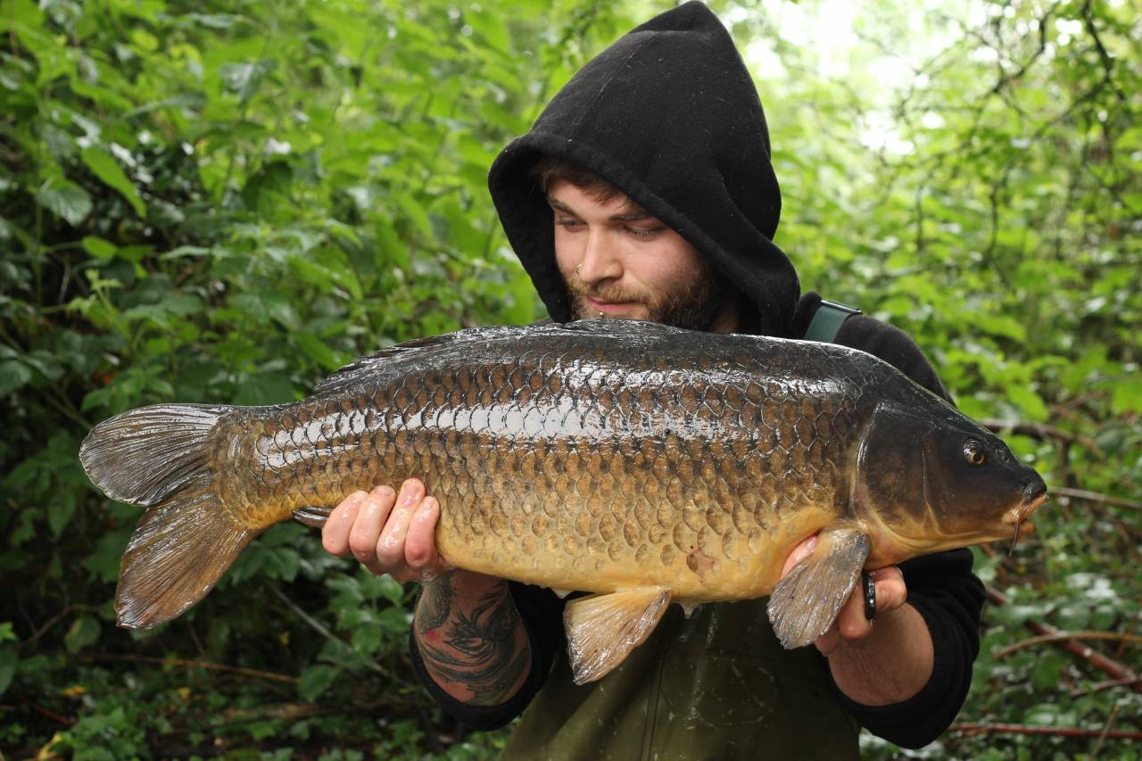 yateley carp dave williams 10
