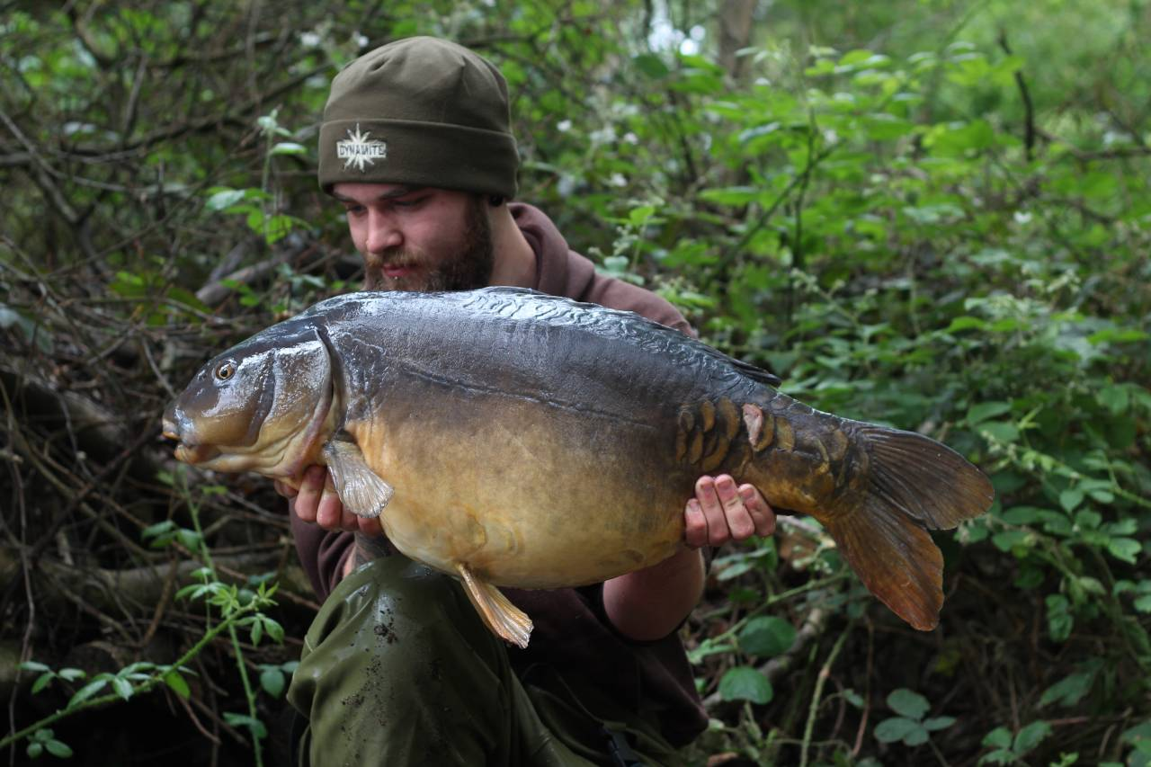 yateley carp dave williams 3