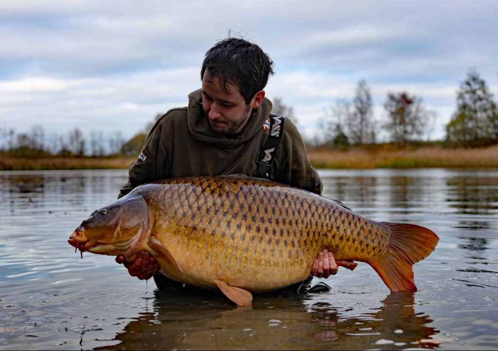 common 3 mick cork fifty